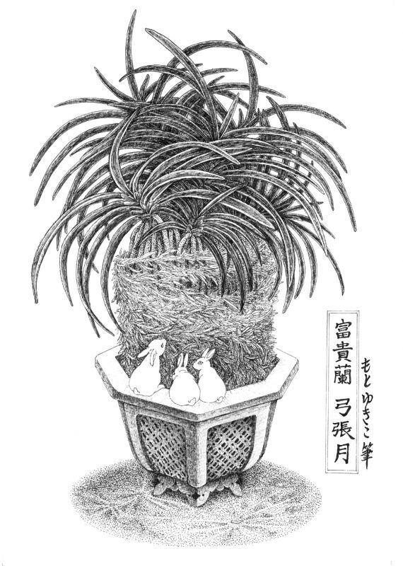 画像1: 【ペン画】『 富貴蘭  -弓張月-』  もとゆきこ